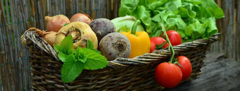 elderly homes plant based diets